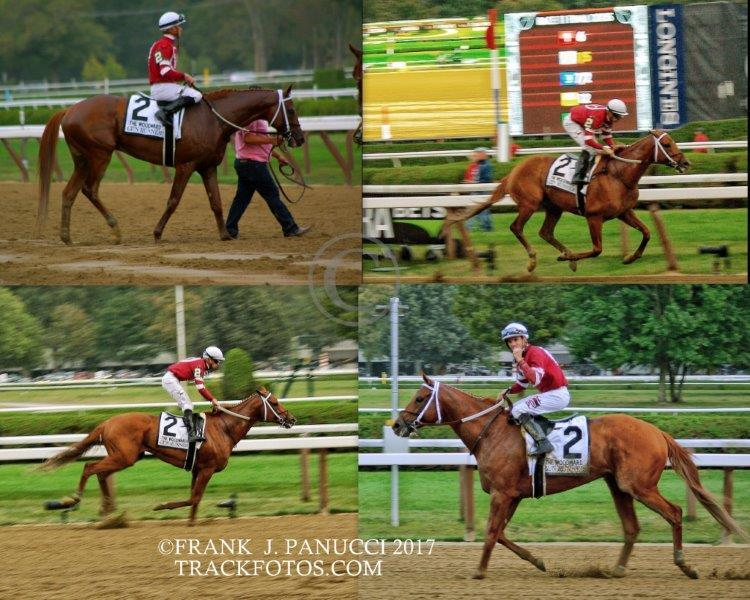 Gun Runner Collage