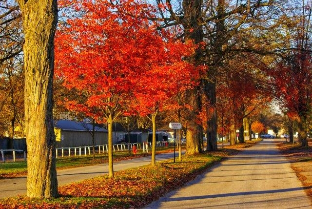 Saratoga in Fall